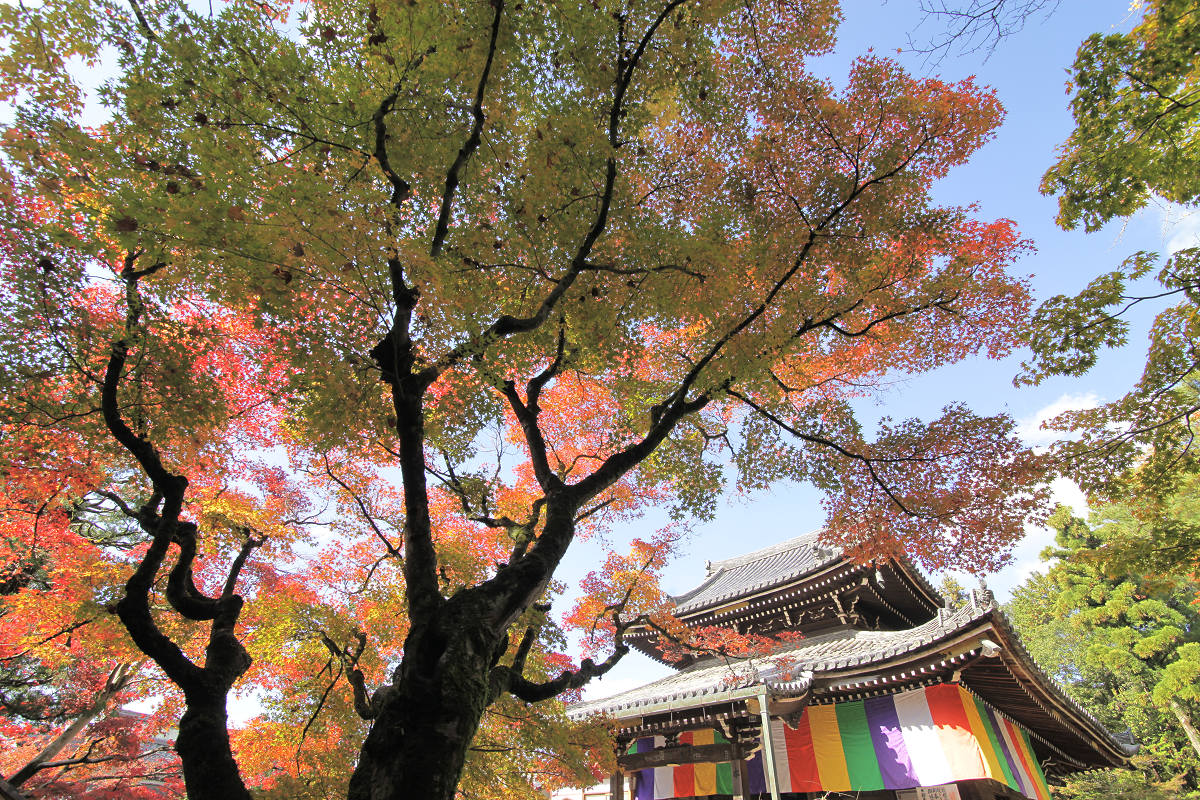 紅葉 2012  東山  今熊野観音寺_f0021869_23152733.jpg