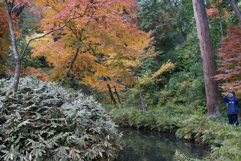 西山荘の紅葉 常陸太田市_b0183886_14305623.jpg