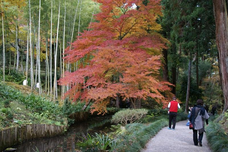 西山荘の紅葉 常陸太田市_b0183886_145021.jpg