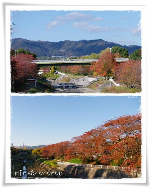 向日神社_a0053987_2058592.jpg