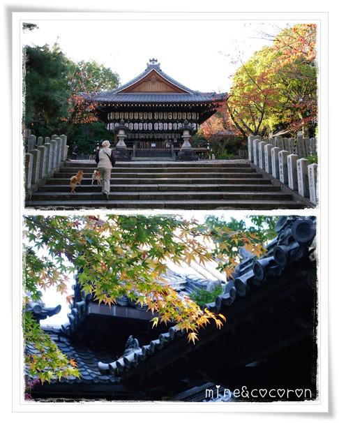 向日神社_a0053987_2111427.jpg