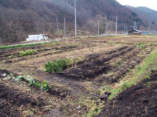 冬の畑_f0236291_8414999.jpg