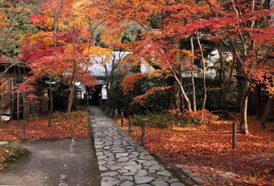 紅葉だより62 蓮華寺 散りモミジ_e0048413_1950275.jpg