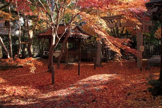紅葉だより62 蓮華寺 散りモミジ_e0048413_19503740.jpg