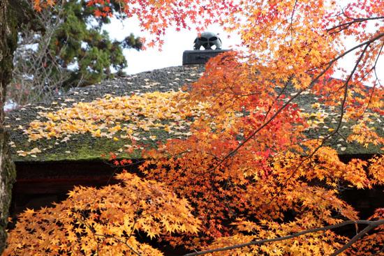 紅葉だより62 蓮華寺 散りモミジ_e0048413_19504930.jpg