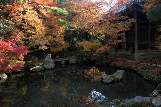紅葉だより62 蓮華寺 散りモミジ_e0048413_19511537.jpg