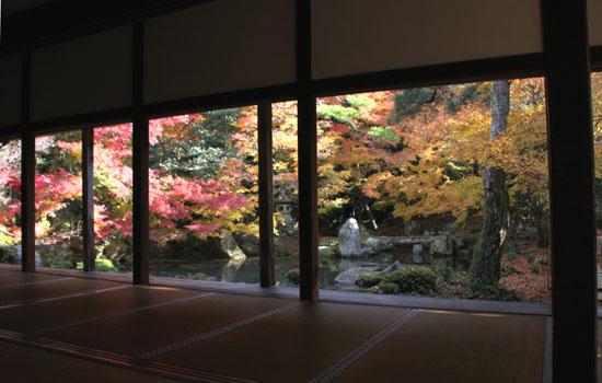 紅葉だより62 蓮華寺 散りモミジ_e0048413_1951265.jpg