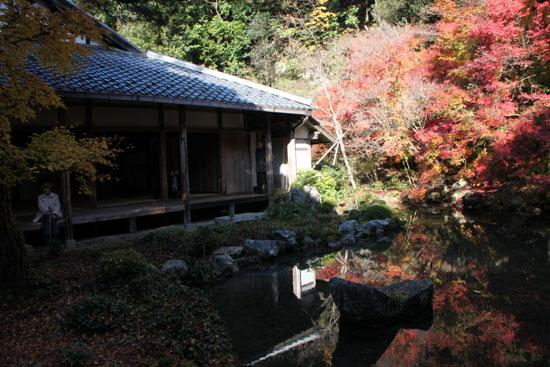 紅葉だより62 蓮華寺 散りモミジ_e0048413_19513079.jpg