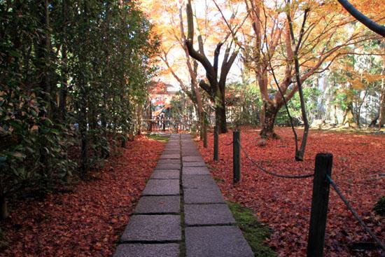 紅葉だより62 蓮華寺 散りモミジ_e0048413_19515466.jpg