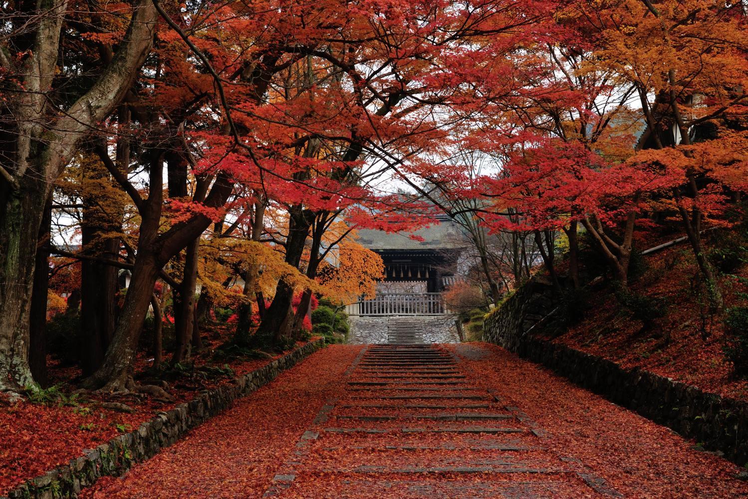 京都報告 その2_c0220824_20471662.jpg