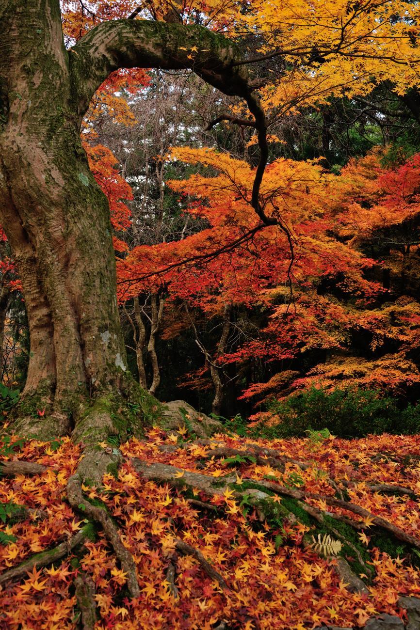 京都報告 その2_c0220824_20473860.jpg