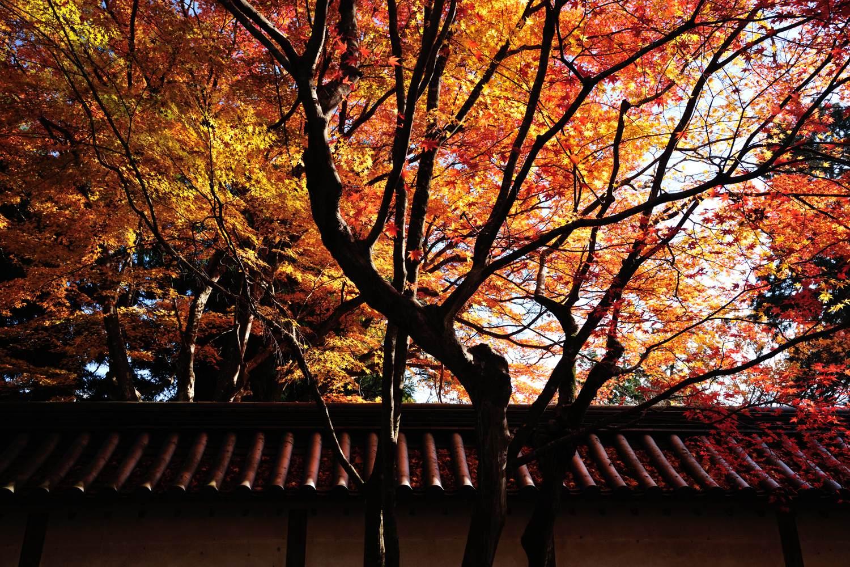 京都報告 その2_c0220824_20475241.jpg