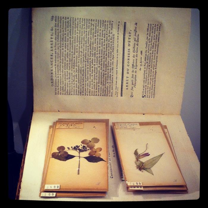 KiKusa  ギリシャ神話のリース展 report_a0156649_17472669.jpg