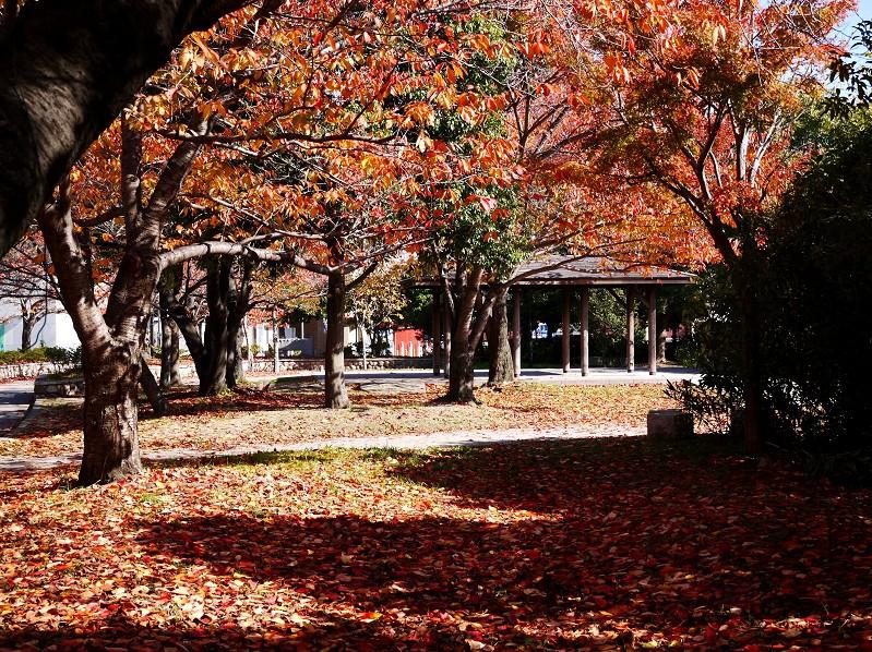 街なかの小公園にて_b0093754_22445593.jpg