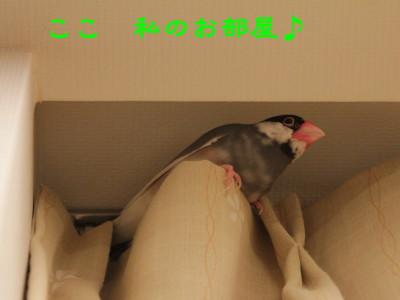 b0158061_2231692.jpg
