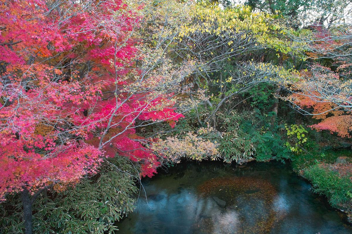 Foveon de 紅葉 2012 IN 万博公園_f0021869_2357476.jpg