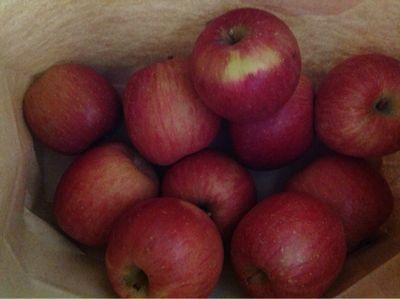 りんご狩り_a0059281_13424192.jpg