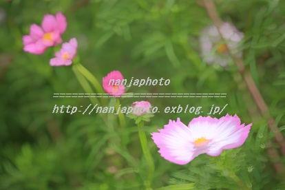 e0268999_1773264.jpg