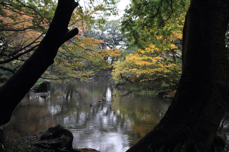 王子  名主の滝公園、写欲の秋_b0061717_017873.jpg