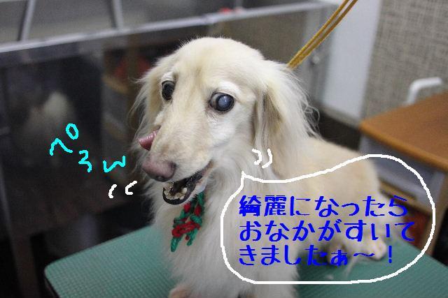 こんにちわぁ~~!!_b0130018_11141657.jpg