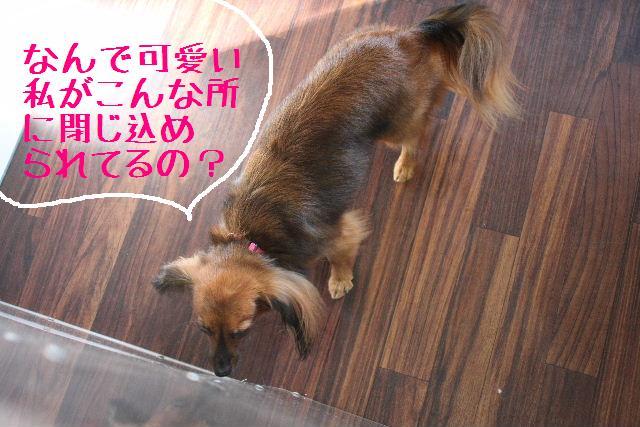 こんにちわぁ~~!!_b0130018_11224490.jpg