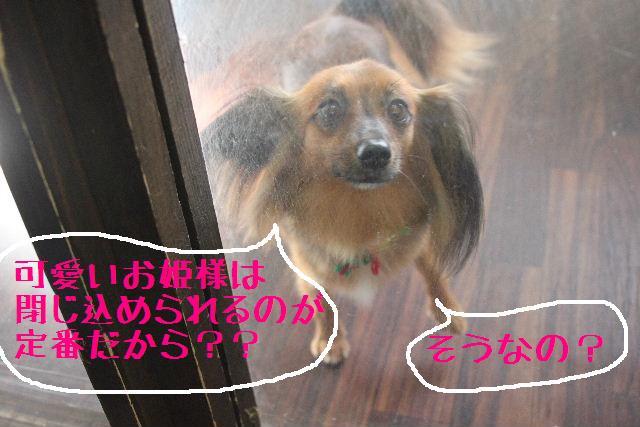 こんにちわぁ~~!!_b0130018_11224917.jpg