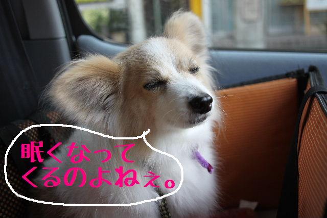 こんにちわぁ~~!!_b0130018_114128.jpg