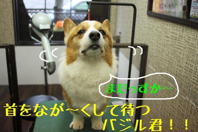 こんにちわぁ~~!!_b0130018_11422527.jpg