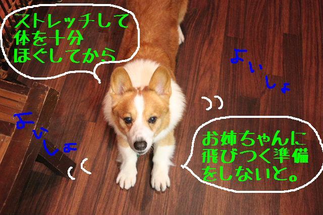 こんにちわぁ~~!!_b0130018_1143270.jpg