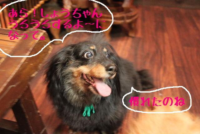 こんにちわぁ~~!!_b0130018_11452236.jpg