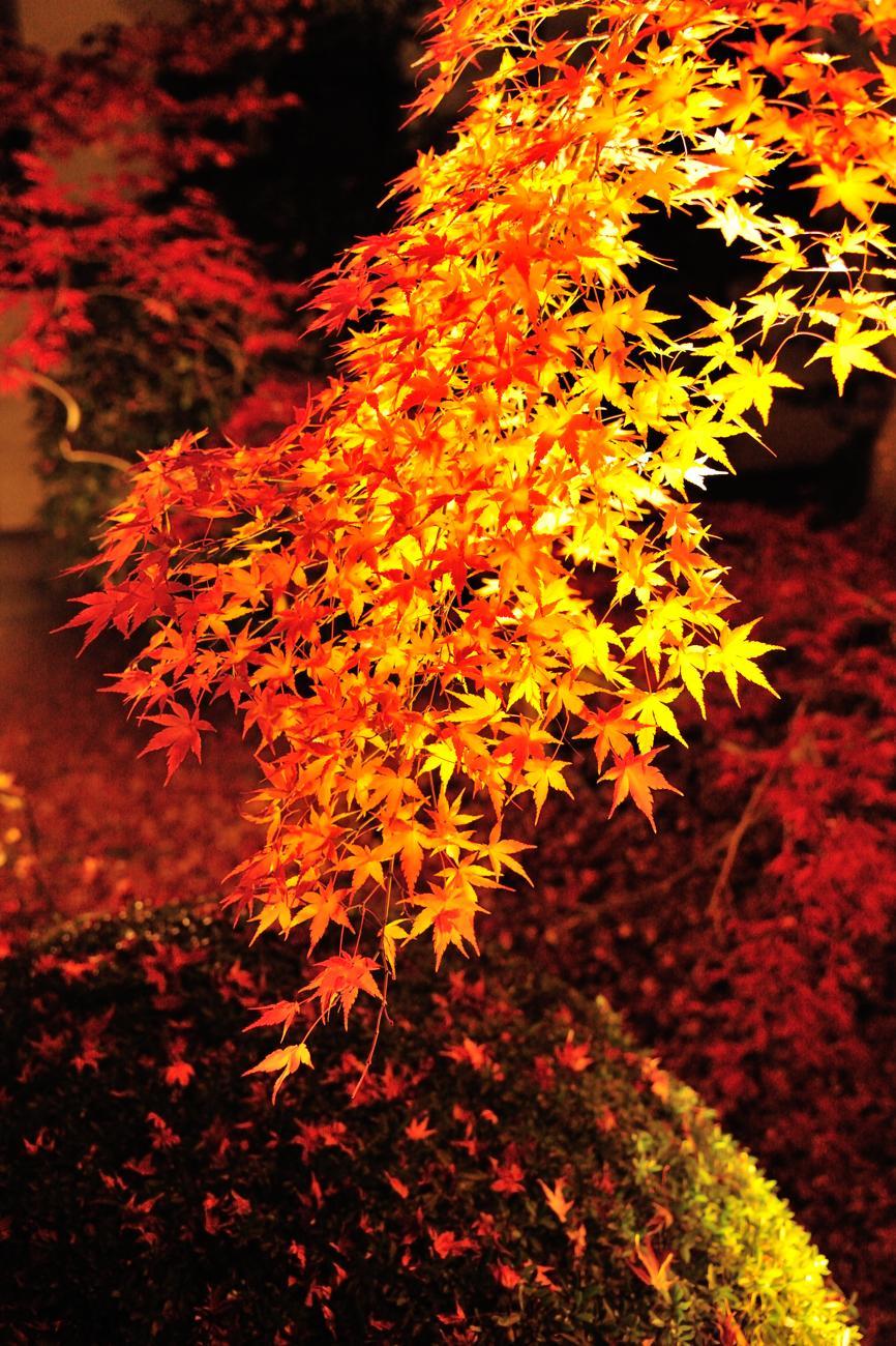 京都報告 その3 _c0220824_18442818.jpg