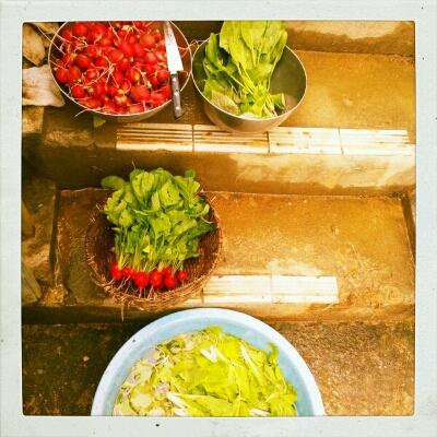 野菜の季節_e0131462_21322842.jpg
