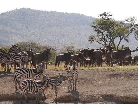 タンザニアの動物_c0177863_19195779.jpg