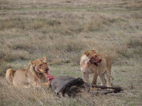 タンザニアの動物_c0177863_19201978.jpg
