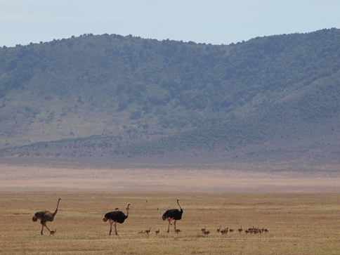 タンザニアの動物_c0177863_1920287.jpg