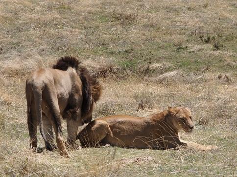 タンザニアの動物_c0177863_1920868.jpg
