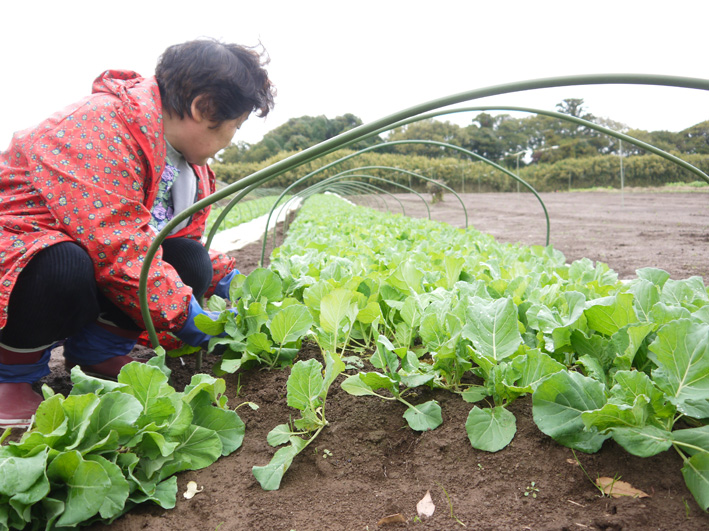 キャベツ(11・25)、ソラマメ(11・28)の苗の植え付け完了_c0014967_15232456.jpg