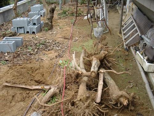 フェンス工事 ~ 植木の撤去_d0165368_10263730.jpg