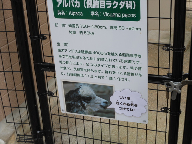 日本で二番目~その2~_c0001670_1443942.jpg