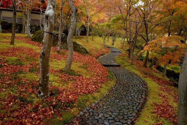 晩秋の風景・その2_d0030373_189597.jpg