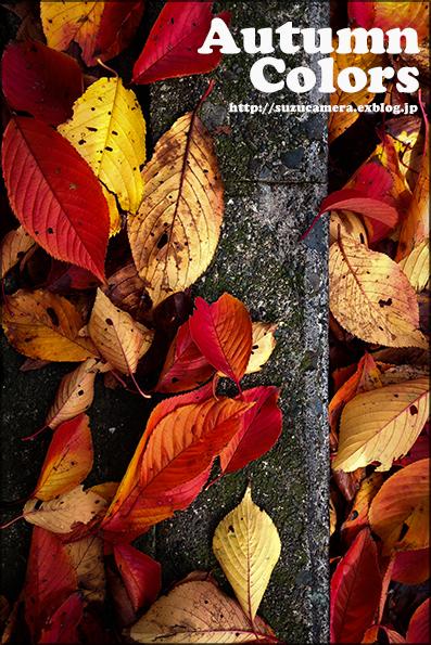 秋色の舗道_f0100215_19514578.jpg