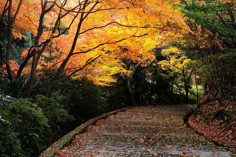 京都報告 その4_c0220824_1936339.jpg