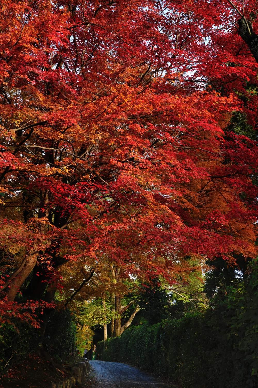 京都報告 その4_c0220824_19365536.jpg