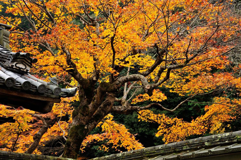 京都報告 その4_c0220824_1938493.jpg