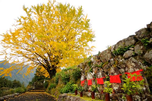熊野川町 泉蔵寺の銀杏_a0097330_15515534.jpg
