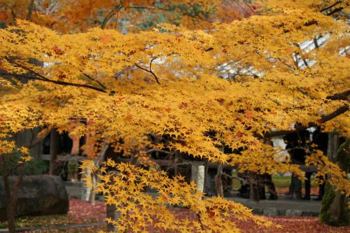 東福寺と嵯峨野の紅葉を楽しむ  京都_d0055236_21434067.jpg