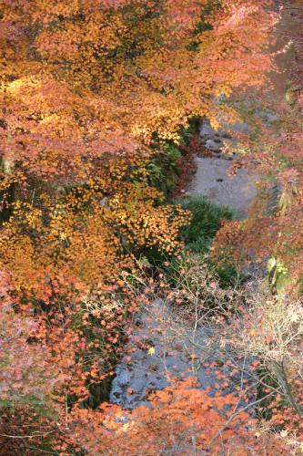 東福寺と嵯峨野の紅葉を楽しむ  京都_d0055236_21443531.jpg