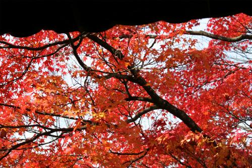 東福寺と嵯峨野の紅葉を楽しむ  京都_d0055236_2144549.jpg