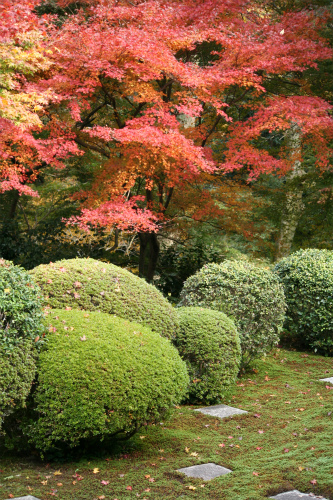 東福寺と嵯峨野の紅葉を楽しむ  京都_d0055236_21452657.jpg