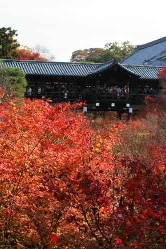 東福寺と嵯峨野の紅葉を楽しむ  京都_d0055236_2145432.jpg